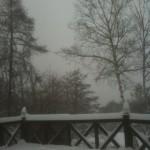 2011/3/7 雪降りました