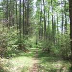 霧ヶ峰・美ヶ原 中央分水嶺トレイル Aコース 林道へ