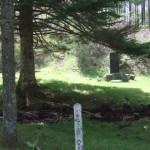 霧ヶ峰・美ヶ原 中央分水嶺トレイル Aコース 牛首小屋跡