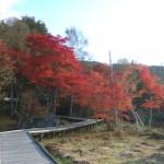 白樺湖 紅葉
