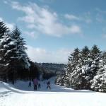 ブランシュたかやま山頂 モミの木樹氷コース