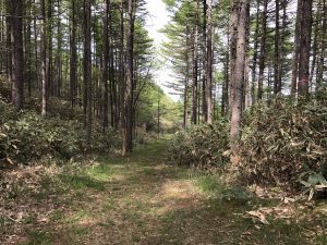 中山道 和田峠から接待茶屋へ