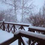 湿った雪20100201