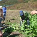 農家の方から収穫の説明を受ける