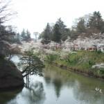 上田城跡公園 上田城千本桜まつり