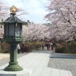 蓼科山  聖光寺の桜