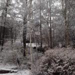 庭 雪景色