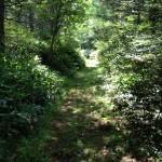 美ヶ原トレイルラン コース整備(草刈り)