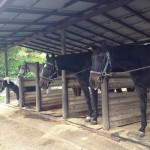 鷹山ファミリー牧場 お馬さん