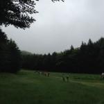 美ヶ原トレイルラン 8kmウォーク