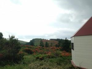 大笹峰 レンゲツツジ ブランシュたかやま頂上付近