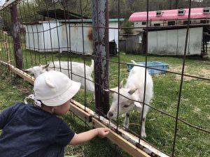 鷹山ファミリー牧場 ヤギ