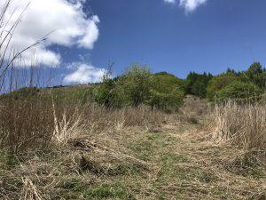 姫木平ハイキングコース 草刈り