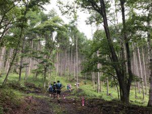 和田峠への林道