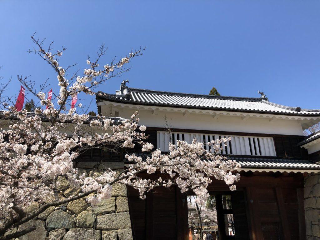 上田城 桜 2020年