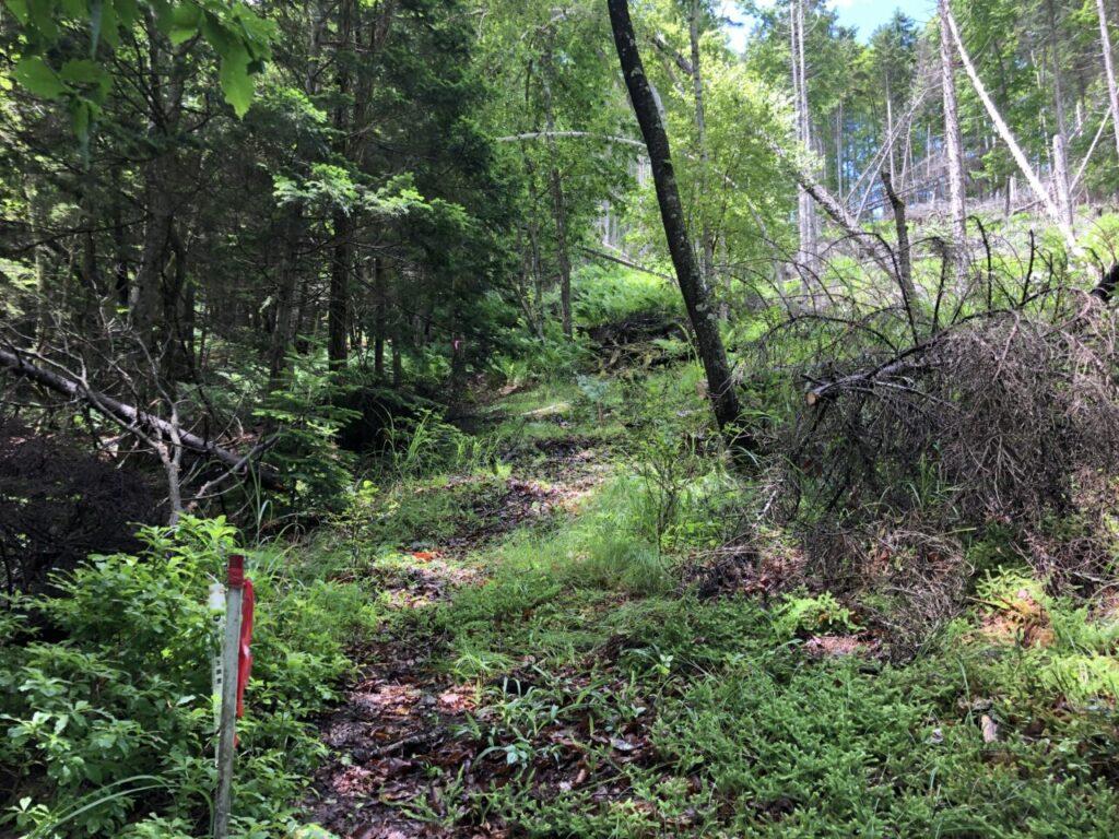 中央分水嶺トレイル 美ヶ原トレイルラン 激坂の倒木処理後